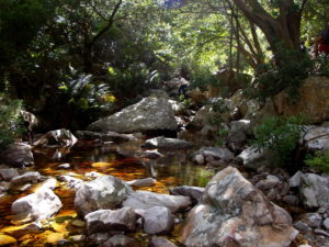 Along the Leopard's Kloof Trail
