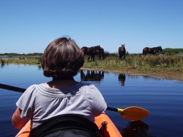 Kayaking the Kleinmond Estuary